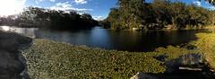 Waterlily panorama at Lake Parramatta (brett.donald) Tags: scenery lake