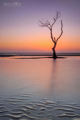 Beachmere Beauty (Beth Wode Photography) Tags: sunrise sunrisesandsunsets dawn morning light orange sunup ripples tree beachmere mangrove mangrovetree seascape tranquil calm lowtide beth wode bethwode