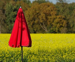 Wer die Kostbarkeit des Augenblicks entdeckt, findet das Glck des Alltags. - Adalbert Stifter (Knarfs1) Tags: umbrella schirm senf feld field mustard autumn herbst sonne yellow gelb red