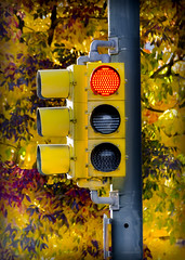 Stop! and enjoy the fall colors (photographyguy) Tags: denver colorado fall autumn leaves trees stoplight redlight pole yellow uptowndenver