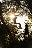 Silhouettes Jumping (Tiomax80) Tags: kids children play playing jump jumping rope trees bokeh nikon d610 85mm river water sun sunlight sunray light leaves rays sunflare flare yellow green silhouettes boys silhouette vidauban fun var varois provence paca france french tiomax nikkor