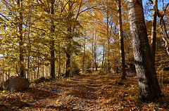 Autumn Rural Road (Tim Lindstedt) Tags: wood woods weather warm eos europe road rural timlindstedt tree trees yellow sunny autumn orange october photo photograph photography province art afternoon sweden sverige scenery scenic scenary season seasons slr digital dslr forest foliage fall landscape light leaves leaf canon color colors vsters vstmanland blue nature natural