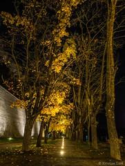Sgisene promenaadi allee (BlizzardFoto) Tags: promenaad promenade allee alley sgis autumn narva narvalinn cityofnarva  htu evening