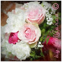bouquet de la marie (GMGprod') Tags: bouquet bygmgprod iledelareunion flower ramo novia bride weddingphoto wedding flor pink nature celebration sayyes weddingphotographer mariage fleur fete noce nupcia nuptial