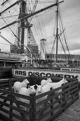 Discovery 1 (aylmerqc) Tags: rrsdiscovery discovery ship sail boat antarctic royalresearchship research polar scott shackleton drydock museum dundee scotland bw blackandwhite fujifilm xe1 fujinon1855mm