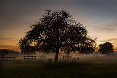 Overseeing the creche. HFF! (Photography by Julia Martin) Tags: uptonuponsevern england unitedkingdom gb photographybyjuliamartin sunset sunsetlight mist misty
