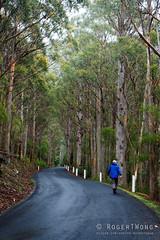 20161018-04-Point to pinnacle training (Roger T Wong) Tags: 2016 australia hobart mtwellington rogertwong sel2470z sony2470 sonya7ii sonyalpha7ii sonyfe2470mmf4zaosscarlzeissvariotessart sonyilce7m2 tasmania wellingtonpark hail rain walk