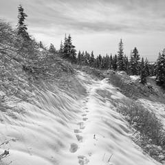 Footprints, Paradise Park (Scott Withers Photography) Tags: paradiseparktrail mthood oregon sonyrx100