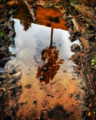 Lonely tree reflection (abhishekskumar) Tags: reflection naturelovers trees tree lonelytree wild classic candid spectacular intothewild cool splendid nature concept change