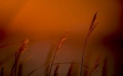 Sunset (Samuli Koukku) Tags: weather sunset sun hay warm colorful autumn backlit finland helsinki lauttasaari outdoor nature 1dx2 canon landscape