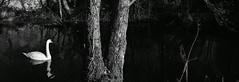 River Argent-Autumn (maxblackphotos) Tags: mono noiretblanc finistere blackandwhite parcdarmorique brittany nikon d750 50mmf18 redfilter incamera strong manualexposure france