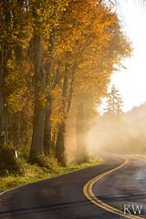 Morning Glow (sleepnever) Tags: fall autumn trees leaves leaf grass colors road fog sunshine sun morning wet washington pnw 100400ii robertwatts