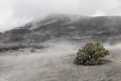 New life (Hans Makkee) Tags: bromo tenggercaldera java indonesia vapor haze