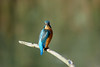Look This Way.......... (klythawk) Tags: kingfisher alcedoatthis branch autumn nature dof blue green orange turquoise grey brown black white olympus em1 omd 100400mm panasonic deltahide attenboroughnaturereserve beeston nottingham klythawk