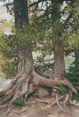 Whitebark pine 4, Chimney Lake, Eagle Cap Wilderness 2016 (Sara J. Lynch) Tags: sara j lynch eagle cap wilderness wallowas eastern oregon white bark pine trees tree old twisted chimney lake nikon 35mm film francis bowman trail