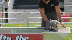 porter county fair. july 2015 (timp37) Tags: swifty pig indiana july 2015 summer porter county fair race