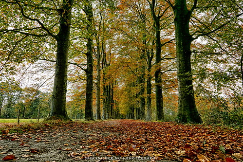 Herfst Park Schothorst