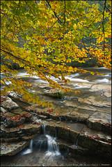 Otoño en el Baias (eredita) Tags: araba euskadi otoño fernaneredita rioaguahojasrelax fondodeescritorio