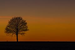 einsamer Baum und Abendhimmel (ho4587@ymail.com) Tags: tamronsp70200f28divcusd abend abdnhimmel himmel licht baum natur abendrot farben