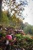 November Fly Agaric 2016 V (boettcher.photography) Tags: mushroom pilz natur nature november herbst autumn fall makro macro flyagaric fliegenpilz germany deutschland sashahasha boettcherphotography