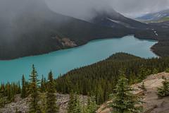 U79A9918 (paulaf55) Tags: canada canadianrockies mountains peytolake