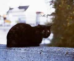 11.11.16-AgfaphotoPrecisaCT100-LeicaIIIf-CanonSerenar50f1.8-01 (dannbis) Tags: 135 agfaphotoprecisact100 analog animals canon50mmf18ltm canonserenar50mmf18 cat leicaiiif schweiz streetphotography switzerland zurich zürich アナログ フィルム ライカiiif レンジファインダー 旁轴 胶片 exif:model=proscan7200 exif:make=reflecta geocountry camera:make=reflecta geolocation geocity geostate camera:model=proscan7200