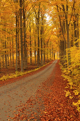 Autumn Road (Tim Lindstedt) Tags: white weather wood woods warm woodland eos road timlindstedt tree trees yellow autumn inspiration image orange overcast october beech photo photograph photography picture province art sweden sverige scenery scenic scenary season seasons slr digital dslr forest foliage fall landscape light leaf leaves canon composition capture color colors nature naturereserve natural black