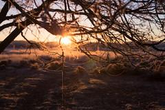 Silk (Mbakker81) Tags: bokeh 50mm natuur winter veluwe nature canon ngc holland sun hei tree 2016 zonsopkomst heide trees ermelo deptoffield sunset morning dof ice