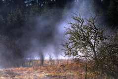 Brume matinale (didier95) Tags: arbre brume passonfontaine doubs franchecomte paysage