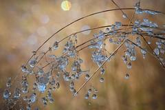 Sonne und Eis (AchimOWL) Tags: gras wiese gegenlicht tropfen eis schnee reif gx80 schärfentiefe natur nature lumix dmcgx80 olympus organischesmuster ngc macrodreams muster textur outdoor stack nrw deutschland