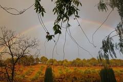 I saw it!  EXPLORE, November 30th 2016 (Micheo) Tags: granada spain arcoiris rainbow lluvia rain sol sunshine cerrodelsol explore ok best cementerio magia magic light luz