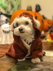 IMG_4513 (Shane Woodall) Tags: 2016 35mm costume ella halloween lily october parade pumpkin shanewoodallphotography sonya7ii starwars twins