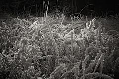 Winterheide (AchimOWL) Tags: eis schnee reif gx80 schrfentiefe natur nature lumix dmcgx80 olympus ngc muster textur outdoor stack nrw deutschland heide sw senne