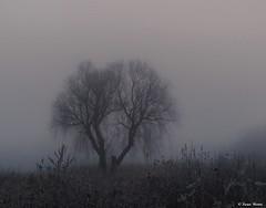 Mystical night.. (tferi666) Tags: sony ilce next alpha a6300 autumn mystic fantastic beautiful nice best amazing sonyflickraward sonyflickrawardgold hungary magyar zemplén