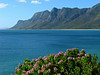 Along the Coast (Colorado Sands) Tags: ocean coast flowers blossoms sandraleidholdt flower mountains southafrica südafrika suráfrica southafrican sudafrika westerncape sea seaside