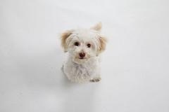 rescue dog happy adopt sfspca