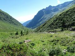 Val Grande (Vezza d'Oglio) (Giorsch) Tags: italy italien italia lombardei lombardia alpen alpi provinciadibrescia parconazionaledellostelvio nationalparkstilfserjoch valgrande vezzad´oglio passodidombastone vallecamonica torrentegrande lombardy