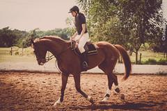 HIPISMO CLÁSSICO (rafaelhabermann) Tags: brazil horse luz girl brasil canon 50mm evento cavalo bh iluminação hípica camera4 sertanejo eos450d hipismo habermann cavalobh rafaelhabermann brasileirosaltador
