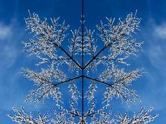 00127 Light tree (anggarfer) Tags: light sky detalle detail tree luz flickr symmetry minimal cielo minimalism minimalismo minimum arbol simetria anggarfer