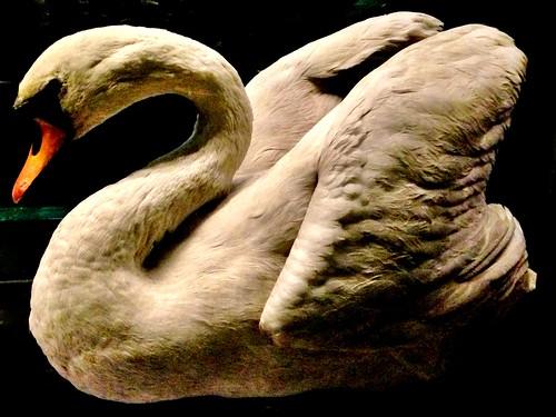 Swan 331