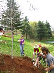 Plant a Wish: North Carolina