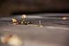 """Primi indizi dell'autunno ("""" paolo ammannati """") Tags: foglie raw photographer shot top natura 1001nights autunno viaggi trentino bosco lagoditenno paoloammannati"""