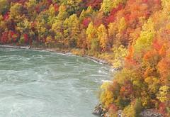 Autumn in Whirlpool of Niagara Gorge (William Wilson 1974) Tags: autumn fall nature niagarafalls niagara