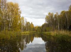 Just another grey autumn day (Steffe) Tags: park autumn trees reflection fall water crimson sweden haninge handen hst sltmossen