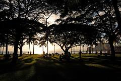 Early Evening in the Park (jcc55883) Tags: hawaii evening nikon waikiki oahu honolulu kapiolanipark yabbadabbadoo d40 nikond40