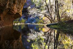 West Fork Sedona Canyon reflections (crisbellaphoto) Tags: west sedona fork oakcreekcanyon westforktrail sedonafallcolors