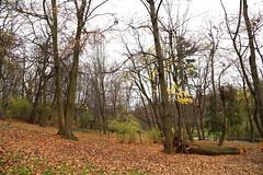 Стрыйский парк -  Львов (Striyski Park Lviv) (feradz) Tags: park autumn nature lviv ukraine парк striyskiypark стрыйский