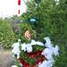 Trees_of_Loop_360_2013_031