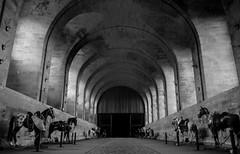 cheval bw (Bp Scancar) Tags: horses bw cheval noir nb et blanc chantilly cheveau cheavau