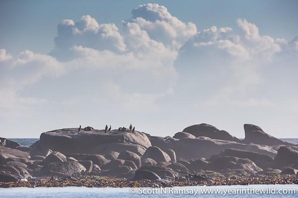 Namaqua National Park - South Africa
